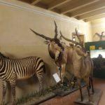 sala del museo zoologico in allestimento