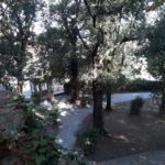 chiusura parco botanico e accesso ai musei di villa da piazza castello